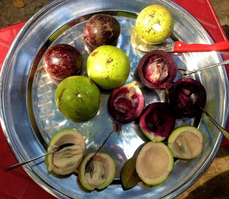 Milk fruit, a native fruit to South Vietnam