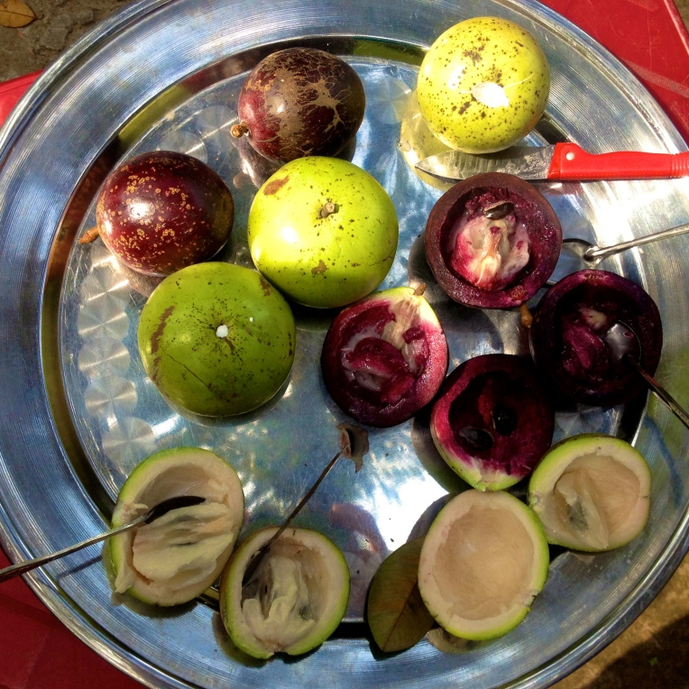 Milk fruit, a native fruit to South Vietnam