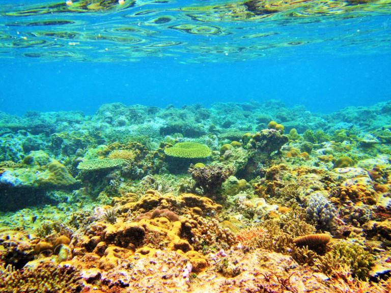 Underwater reefs in El Nido, Palawan